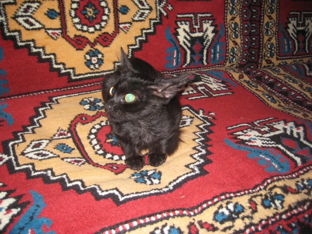 Cat at the Hi-Caz Bar in Cunda, Turkey