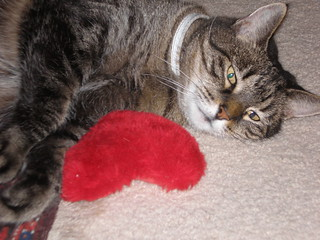 Gizmo Still Loving Her Heart