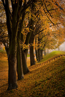 Polish Golden Autumn