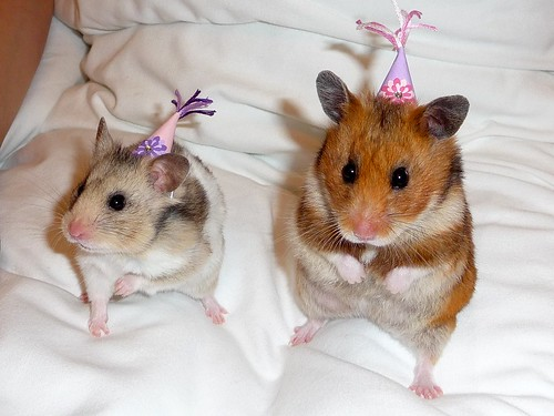 Petal and Lupin in their Party Hats