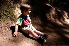 walking in the humboldt redwoods    MG 1189