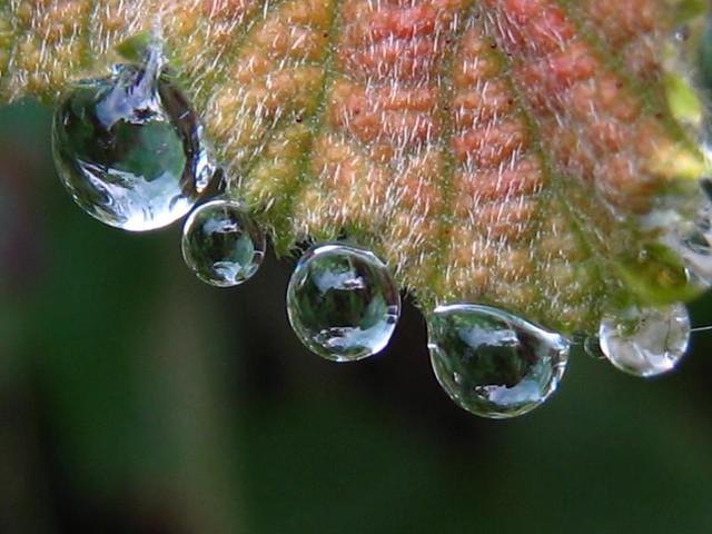 | صور رائعه على مقربه من قطرات المياه مناظر رائعه | 3883349134_b3e9c527f9_z.jpg?zz=1