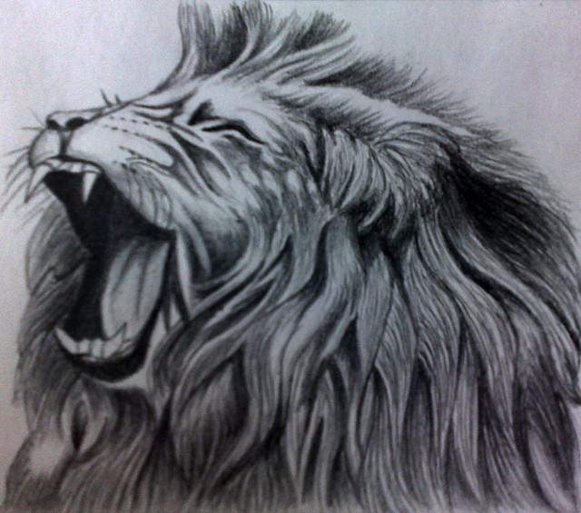 roaring lion flickr photo sharing