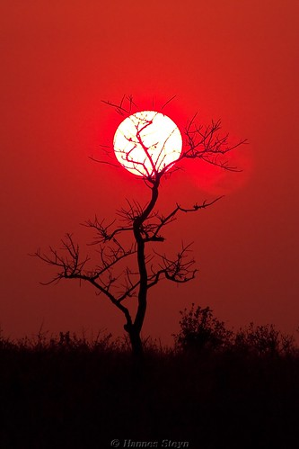 africa sunset red sky sun nature silhouette canon southafrica landscapes scenery dusk getty reserves krugernationalpark mpumalanga limpopo knp canonef70300mmf456isusm 450d noti500 canon450d hannessteyn eosdigitalrebelxsi