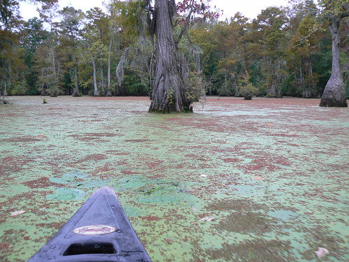 Merchants Millpond - Canoe and Green and Red Algae