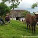 Kids and Their Donkey - Otavalo, Ecuador