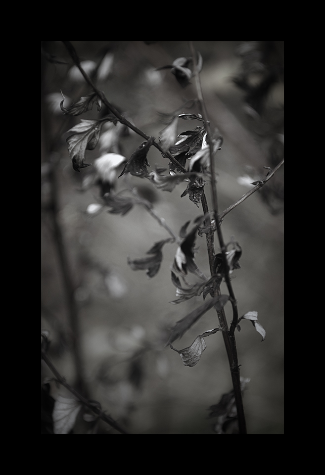 Photography: Little Leaves by Nicholas M Vivian