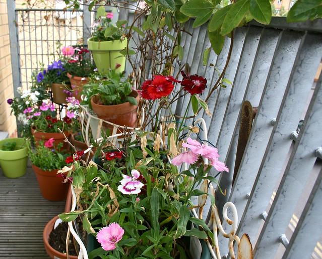 Landscaping With Honeysuckle : Balcony garden with honeysuckle party balconies and gardens