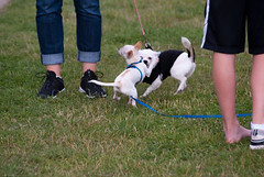 dog sports(0.0), animal sports(0.0), sports(0.0), dog agility(0.0), dog(1.0), pet(1.0), mammal(1.0), dog walking(1.0),