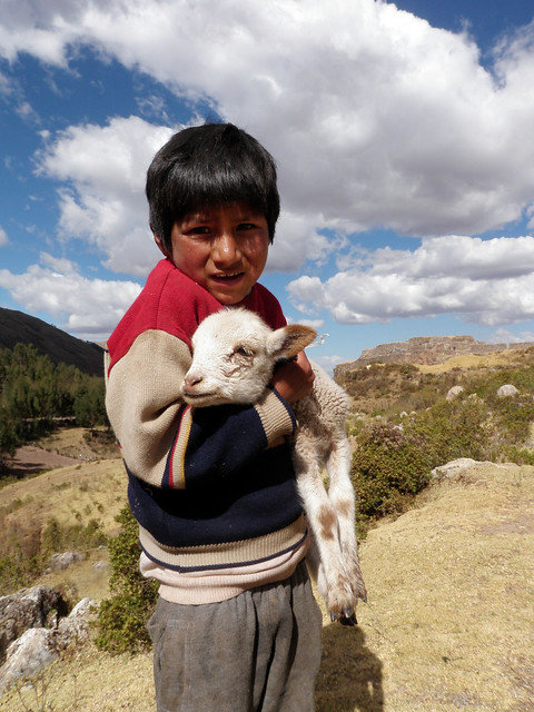 Puca Pucara - A Sheep and his Boy