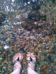 coral, water, marine biology, tide pool, reef,