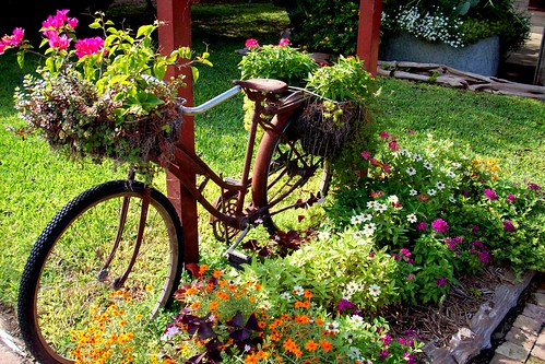 Blooming Bycicle