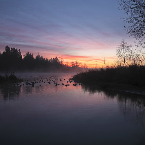 autumn mist fall sunrise dawn december ducks surrey morningmist canonef1740mmf40lusm surreylake kvdl