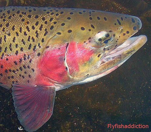 Taylor river fall 09 for Taylor fish farm