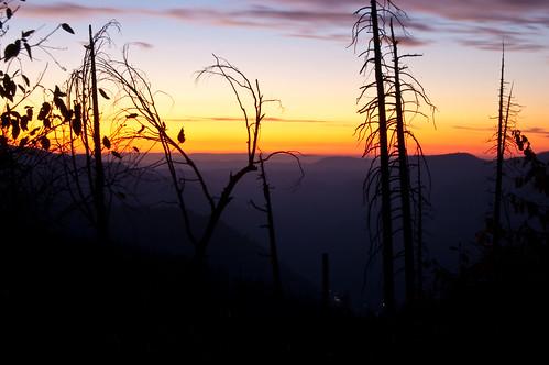 trees sunset silhouette nationalpark yosemite