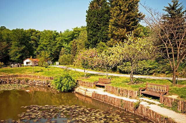 Ataturk Arboretum, the Best Botanical Garden to Explore in ...