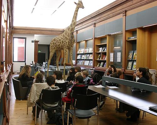 Lectures - Festival Terres Insolites au Muséum de Toulouse