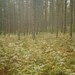 Forest by jakem
