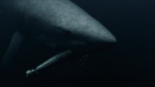 Shark eats submarine | From MEGA SHARK VS. GIANT OCTOPUS ...