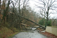 Fallen Tree after 'La Tempête Hivernale', Midi Pyrenees, France - Photo of Thil
