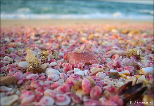 Shells in Oman