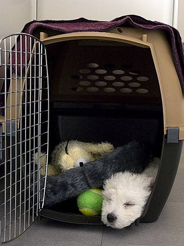 Köpek Kafes Eğitimi