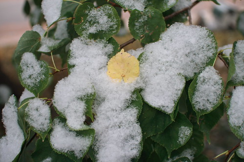 snow :: leaves