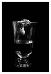 snails on my wineglass
