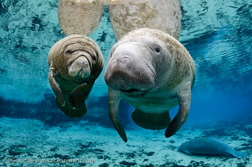 Manatee_Next_Generation_1