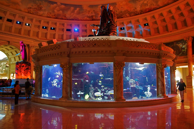 Flickriver most interesting photos tagged with for Fish tank las vegas