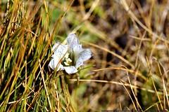 macro wildflower    MG 4004