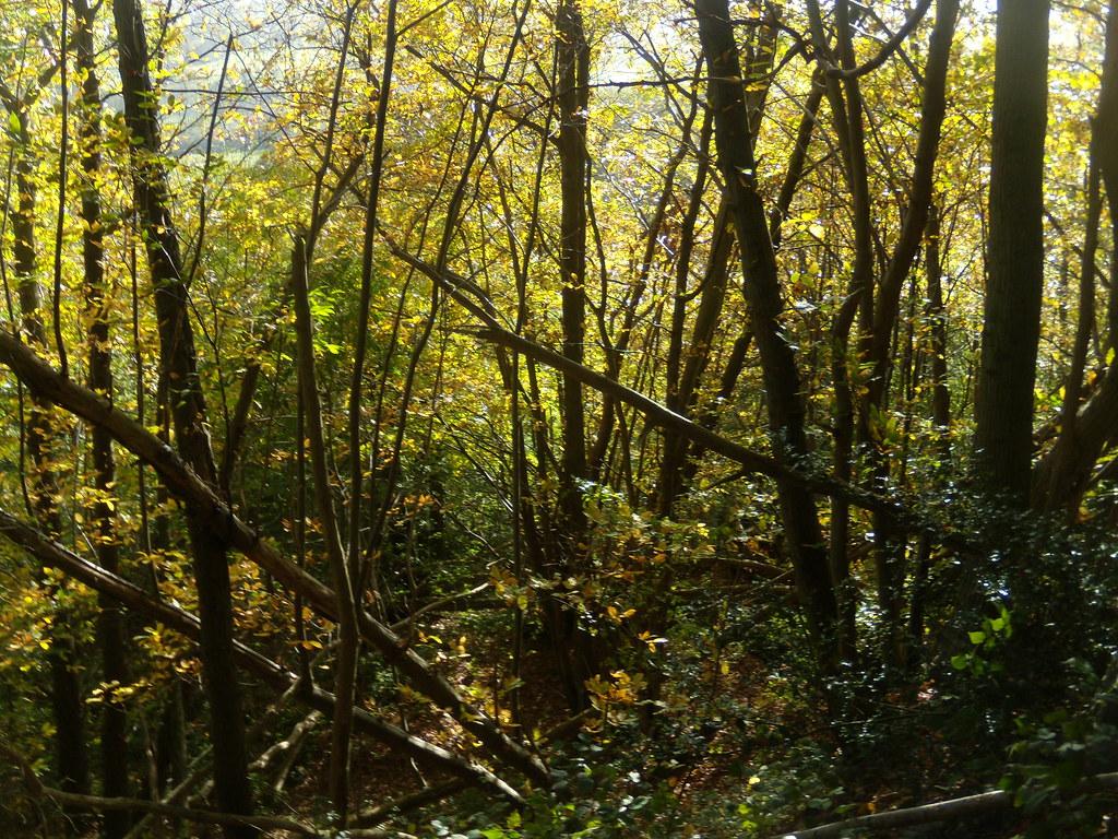 Autumn colours Sevenoaks Circular