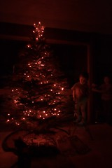 lighting the xmas tree   brothers (and the kitten) a…