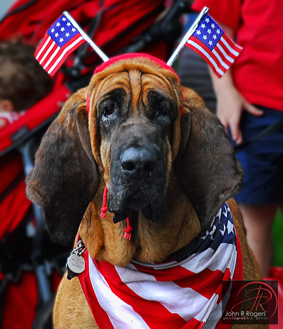 Red, White & Blue Dog Democrat