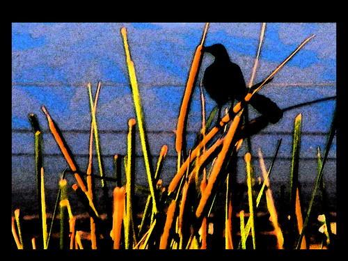 bird art landscape thistle digitalart raven fresco dscf4157 awardtree fujfiilmfinepixs5700 florenceazusa