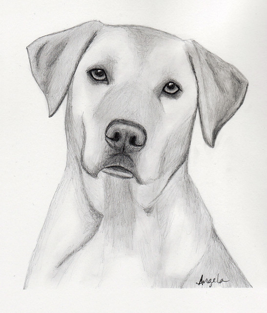 How To Draw Black Lab Dog