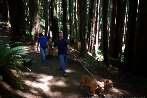 walking in the humboldt redwoods    MG 1144