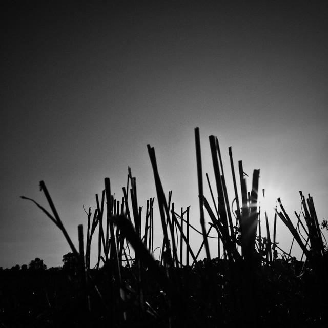 Corn & Sun