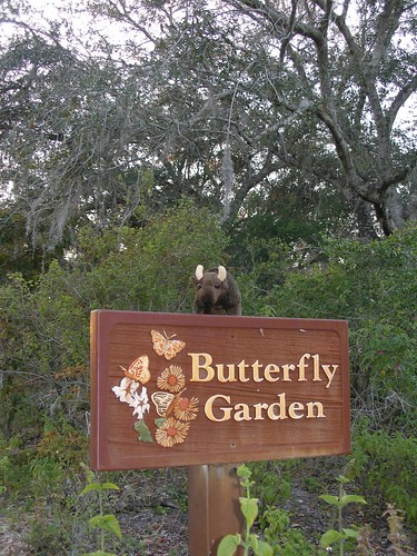 Buddy at Loxahatchee NWR Butterfly Garden in FL