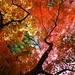 Canopy of autumn colors by kaycatt*