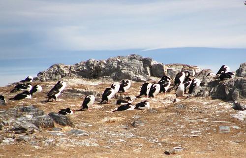 pinguinos 1