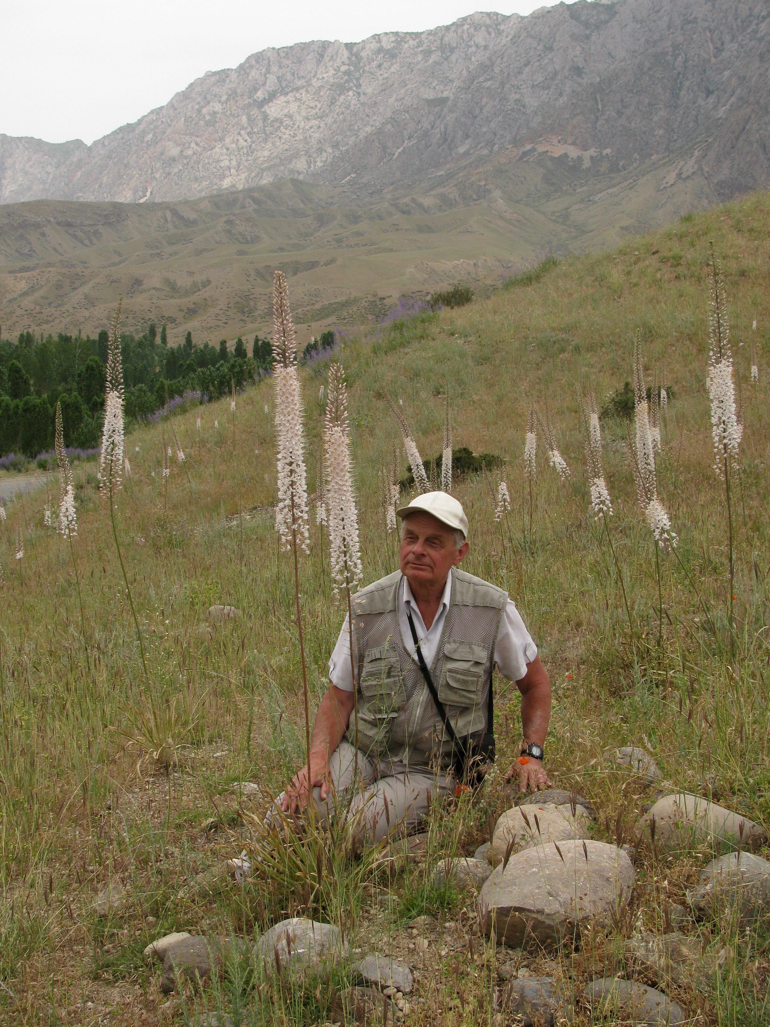 Eremurus tianschanicus (Asphodelaceae) and prof. Kaabak