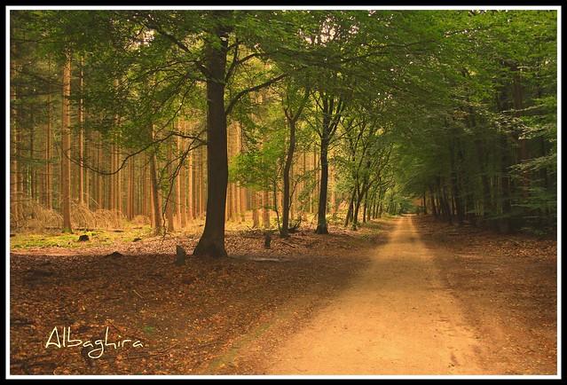 Dancing forest (Speulderbos)