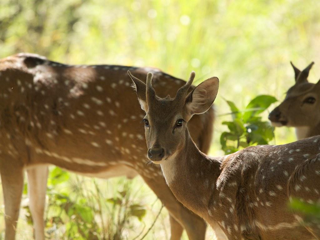 Aranya Safari Resort Uttarakhand India Around Guides