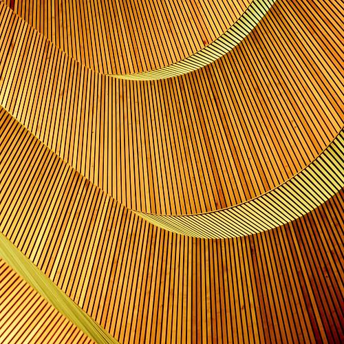 wood building lines yellow zurich missyou santiagocalatrava daruma swoosh universityofzurich 500x500 canon24105f4lis legallibrary winner500 canon5dmarkii ministract jibbr juristischefakultätsbibliothekderuniversitätzürich walkingaroundzurichwithjorgritaandbarbara