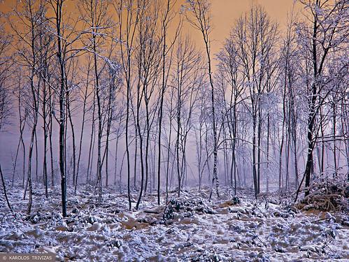 wood winter snow forest greece macedonia sunsettrees pigadia digitalcameraclub imathia
