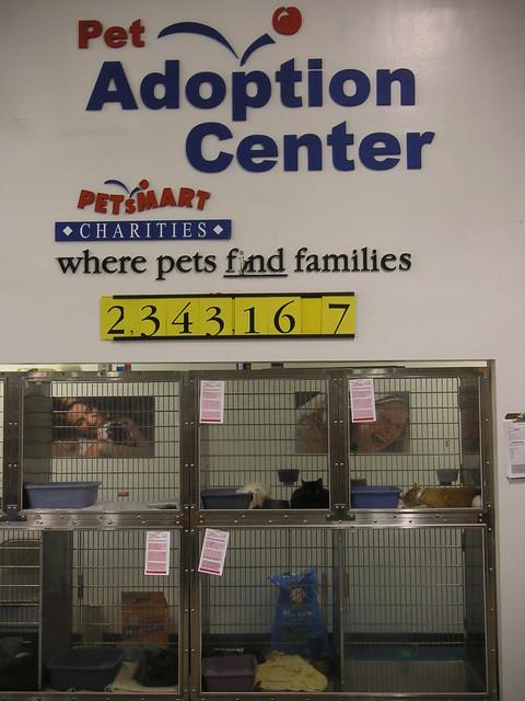 pet smart adoption center flickr   photo sharing