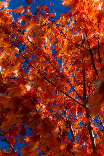 autumn fall wisconsin finepix fujifilm nikkor 2870mmf3545d polarizer 2009 s3pro catchycolorsorange dousman artofimages