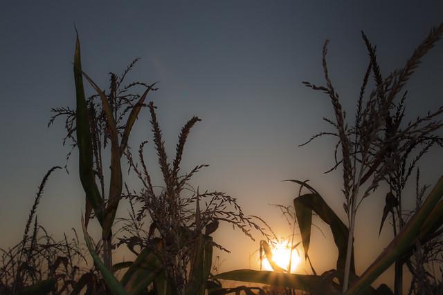 Summer & Sunset