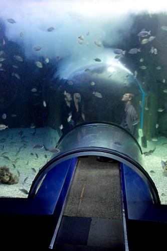 Valencia s oceanografic europe s biggest aquarium hola for Aquarium valencia bar